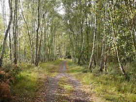 Woodland Path, Chobham Common (c) GanMed64 via Flickr