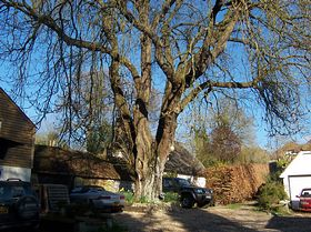The old smithy's shop under the great chestnut tree,the tree is over 300yrs old  Figheldean © B. Reed