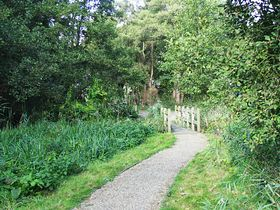 Walkway to The Filby Broad © Peggy Cannell