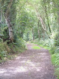 Fingland Rgg woodland walk © Mike Faulkner