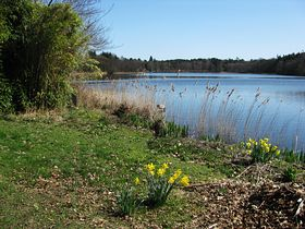 Fritton Lake © Peggy Cannell