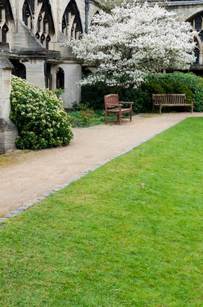 Garden at Gloucester Cathedral with blossom tree and benches