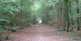 Hamstreet Woods © Adam Colton
