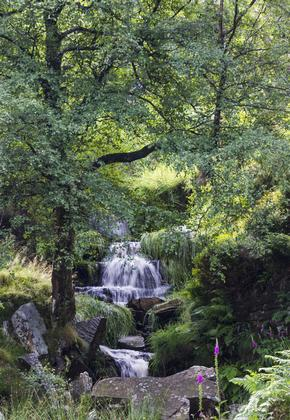 Bronte Falls, Haworth Moor, West Yorkshire, England, as featured in the Bronte Sisters