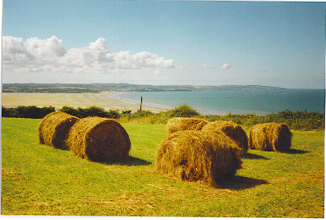 Harvest Field near Llanddona