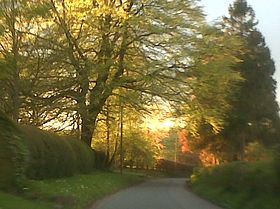 View through the trees in village © paddy
