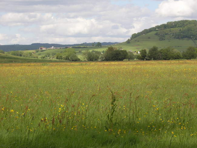 Meadow on Long Drove © Rod Morris