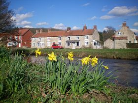 Daffodil's by the river © Philip Cookson
