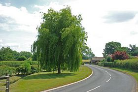 The Willow Tree  as you approack Spofforth from the West. © Mr Philip Moon (HKt B)