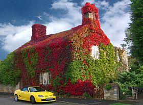 Virginia Creeper Main Road, Syston © Ted Clark