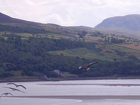 Geese over the Kyle of Tongue © Cate Wells