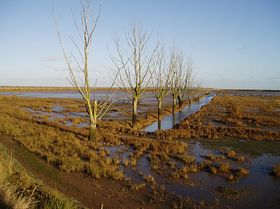 Managed coastal realignment, Tollesbury, part one © Sarah Clare