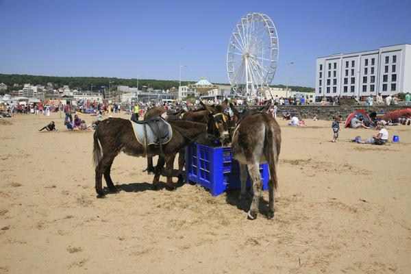 Beach Donkeys on Weston-Super-Mare Beach on a hot day